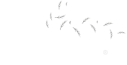 Calliance logo
